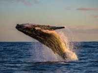 Oracle Times: Whale Alert: Massive $417 Million BTC Transfer